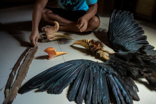 """Nước mắt chim Tê Điểu: """"Báu vật sống"""" bị săn lùng vì có chiếc mỏ đắt gấp 3 lần ngà voi - ảnh 11"""