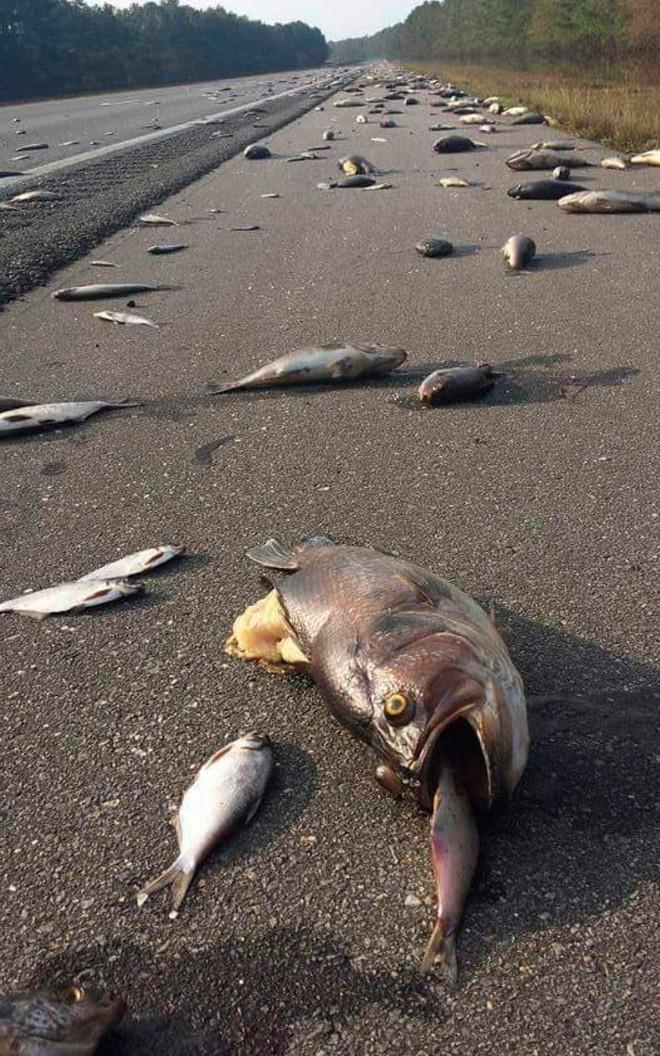 24h qua ảnh: Cá mắc cạn hàng loạt trên đường phố sau lũ lụt ở Mỹ - Ảnh 9.