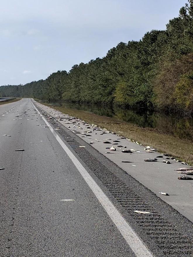 Cái chết trắng xuất hiện trên đường cao tốc Mỹ - thảm cảnh đáng buồn sau siêu bão  - Ảnh 1.