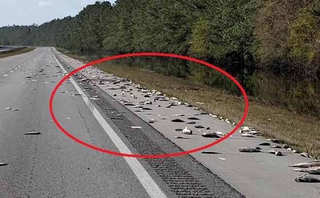 """""""Cái chết trắng"""" xuất hiện trên đường cao tốc Mỹ - thảm cảnh đáng buồn sau siêu bão"""