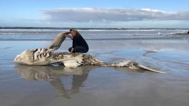 Câu chuyện về những con cá mập trắng khổng lồ bị moi gan, móc tim - bí ẩn chưa có lời giải của năm 2017 - Ảnh 2.