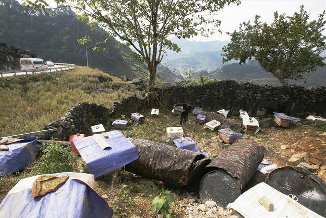 Mùa thu hoạch mật ong trên cao nguyên đá Hà Giang - Ảnh 1.