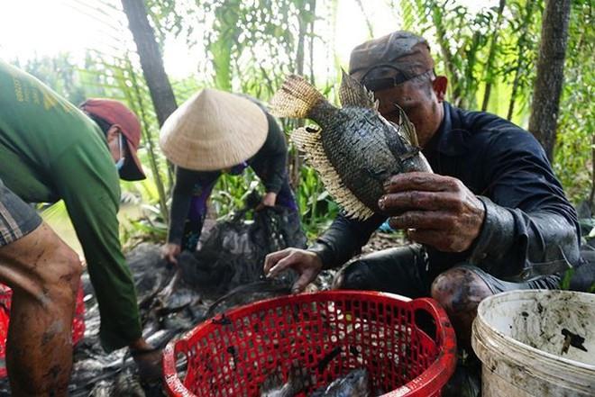 Xem người Sài Gòn thả lưới, bắt cá dịp giáp Tết - Ảnh 1.