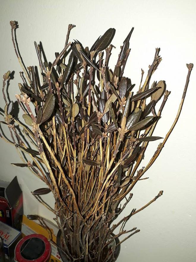 Bà nội trợ Hà thành 'phát sốt' với hoa 'đỗ quyên ngủ đông' như bó củi khô giá 200 nghìn đồng  - Ảnh 1.