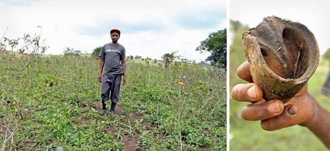 Người châu Phi than trời vì lừa bị đánh cắp lấy da để sản xuất thành dược liệu quý ở TQ - Ảnh 1.