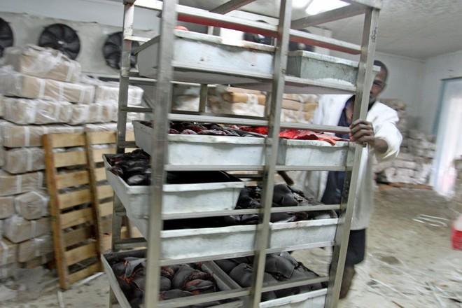 Người châu Phi than trời vì lừa bị đánh cắp lấy da để sản xuất thành dược liệu quý ở TQ - Ảnh 6.