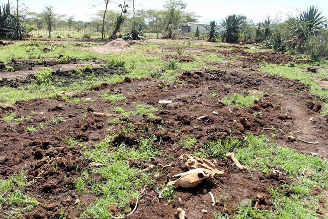 Người châu Phi than trời vì lừa bị đánh cắp lấy da để sản xuất thành dược liệu quý ở TQ - Ảnh 7.