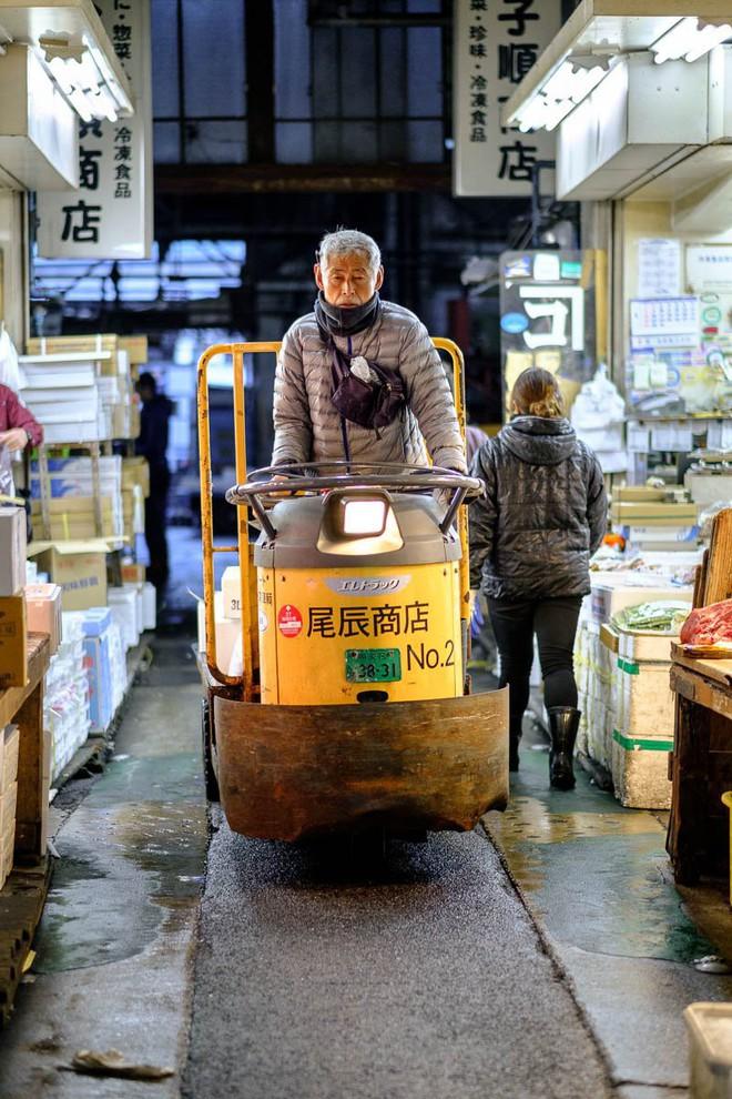 Trong chợ cá lớn nhất thế giới tại Nhật Bản: Mỗi con cá ngừ được bán với giá bằng vài ngôi nhà Nhật Bản - Ảnh 15.