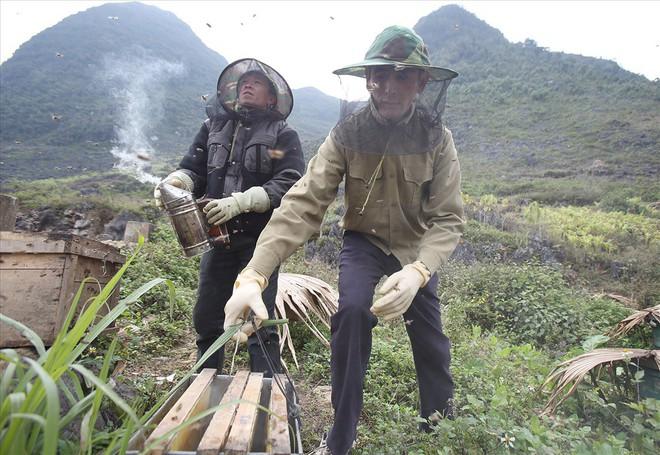 Mùa thu hoạch mật ong trên cao nguyên đá Hà Giang - Ảnh 3.