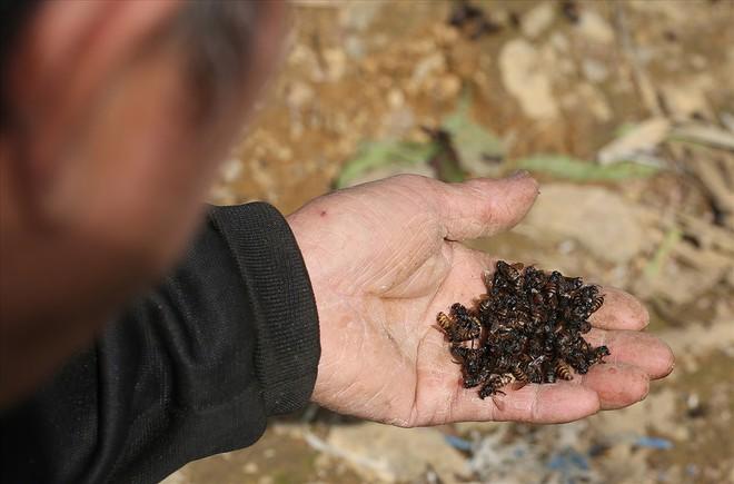 Mùa thu hoạch mật ong trên cao nguyên đá Hà Giang - Ảnh 4.