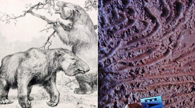 Phát hiện hang động khổng lồ bí ẩn, các nhà địa chất ngạc nhiên khi biết chủ nhân thực sự của nó - Ảnh 4.