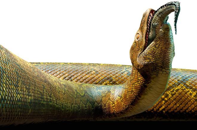 Đã từng tồn tại loài rắn dài ngang chiếc xe bus, mới nghĩ đến đã thấy run - ảnh 4