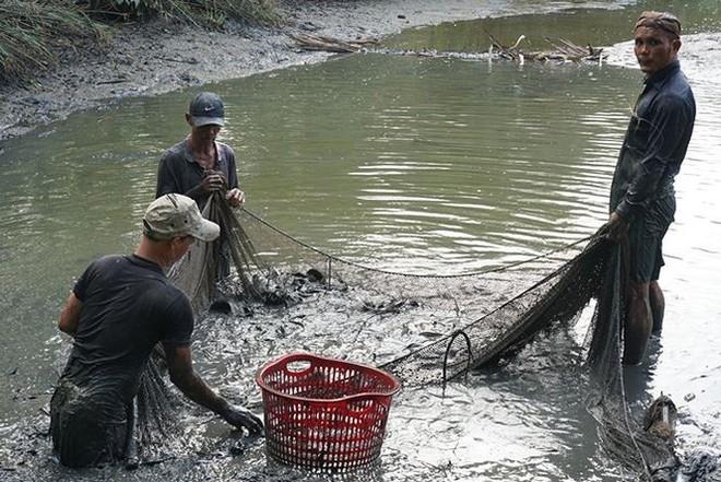 Xem người Sài Gòn thả lưới, bắt cá dịp giáp Tết - Ảnh 5.