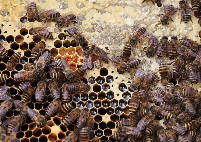 Mùa thu hoạch mật ong trên cao nguyên đá Hà Giang - Ảnh 6.