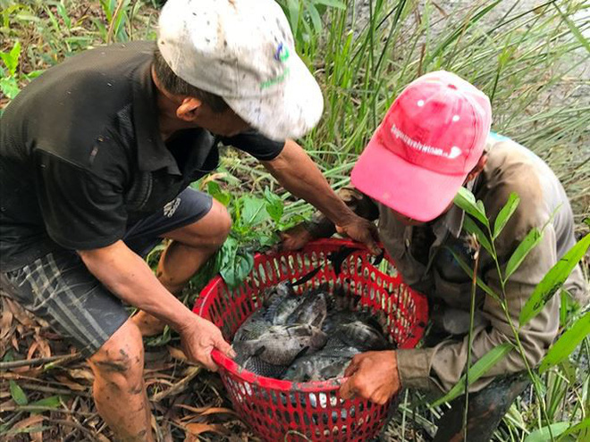 Xem người Sài Gòn thả lưới, bắt cá dịp giáp Tết - Ảnh 6.