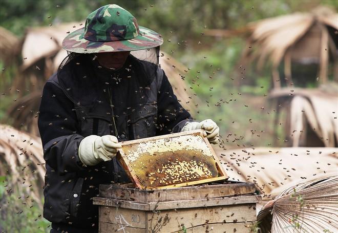 Mùa thu hoạch mật ong trên cao nguyên đá Hà Giang - Ảnh 7.