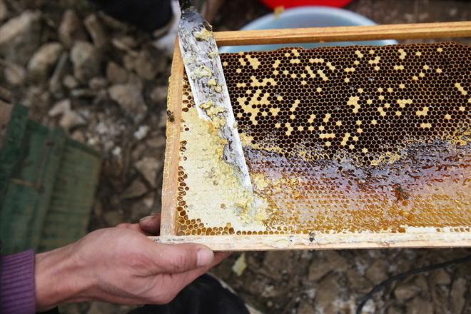 Mùa thu hoạch mật ong trên cao nguyên đá Hà Giang - Ảnh 8.