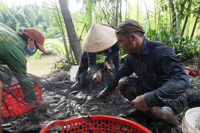 Xem người Sài Gòn thả lưới, bắt cá dịp giáp Tết - Ảnh 8.