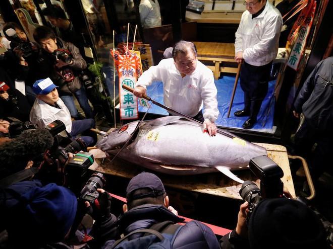 Trong chợ cá lớn nhất thế giới tại Nhật Bản: Mỗi con cá ngừ được bán với giá bằng vài ngôi nhà Nhật Bản - Ảnh 8.