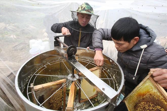 Mùa thu hoạch mật ong trên cao nguyên đá Hà Giang - Ảnh 9.