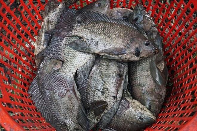 Xem người Sài Gòn thả lưới, bắt cá dịp giáp Tết - Ảnh 9.
