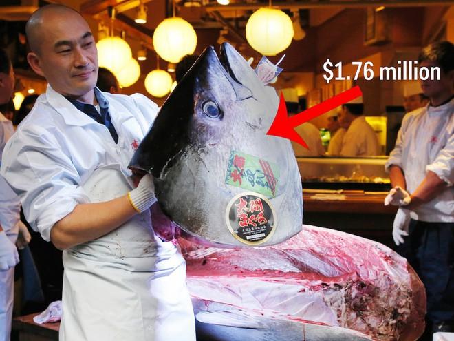 Trong chợ cá lớn nhất thế giới tại Nhật Bản: Mỗi con cá ngừ được bán với giá bằng vài ngôi nhà Nhật Bản - Ảnh 9.