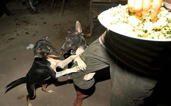 Nhìn những bức ảnh đầy cay đắng và xót xa này, bạn sẽ thề không bao giờ ăn thịt chó nữa!