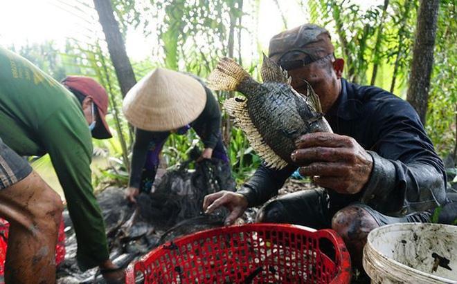 Xem người Sài Gòn thả lưới, bắt cá dịp giáp Tết