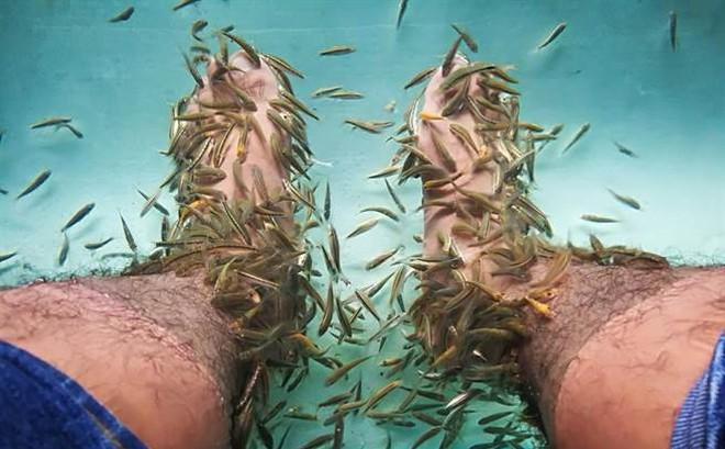 10 năm không rửa chân, vừa thả chân vào nước người đàn ông khiến cá chết hàng loạt