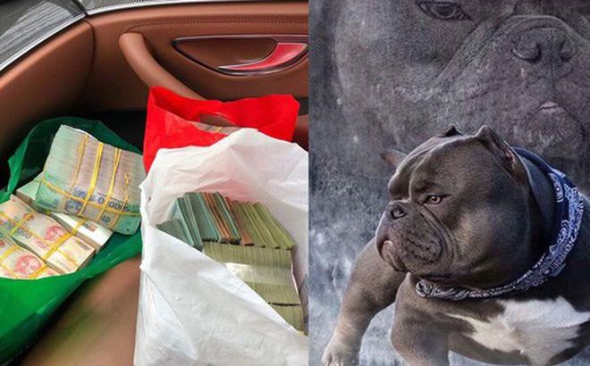 Thanh niên Việt rút 2,6 tỷ trong ngân hàng, lặn lội sang nước ngoài để mua bằng được chú chó mình yêu thích