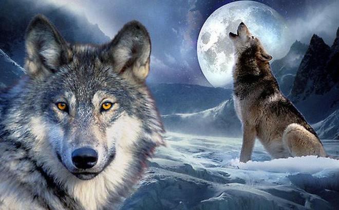 """Từ """"con sói cô độc"""" trở thành sói đầu đàn dũng mãnh nhất thảo nguyên: Nguyên tắc thành công quan trọng nhất đời người"""