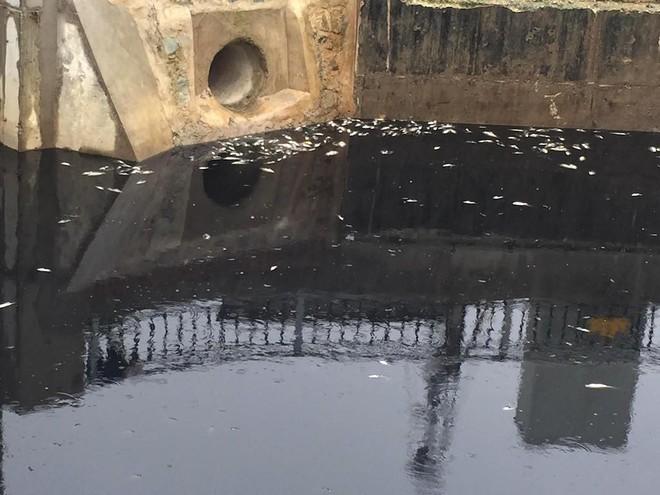 Nước kênh hào Thành cổ Vinh đen như mực, cá chết hàng loạt, dân lo sợ cầu cứu - Ảnh 4.