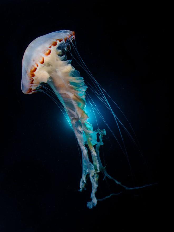 Như lạc vào thế giới khác với chùm ảnh đại dương đẹp nhất năm 2018 - Ảnh 13.