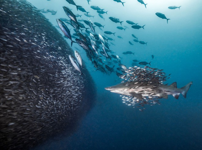 Như lạc vào thế giới khác với chùm ảnh đại dương đẹp nhất năm 2018 - Ảnh 7.