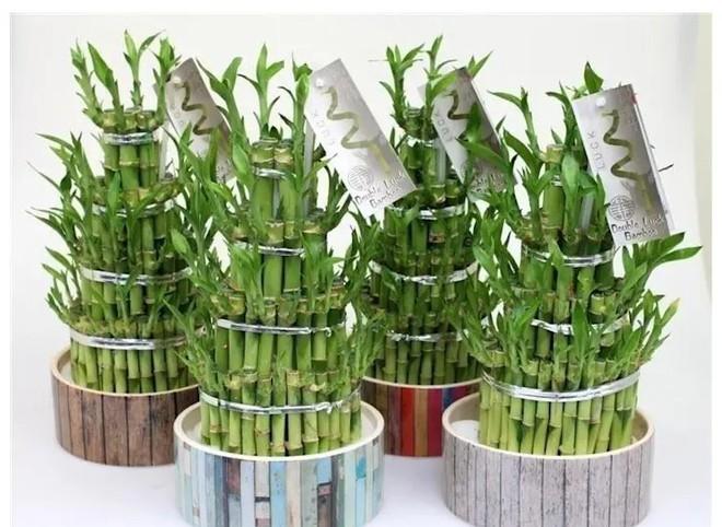 Năm 2019 đến rồi: Đây là 7 loại cây nên trồng để thu hút tài lộc cho gia đình bạn - Ảnh 3.