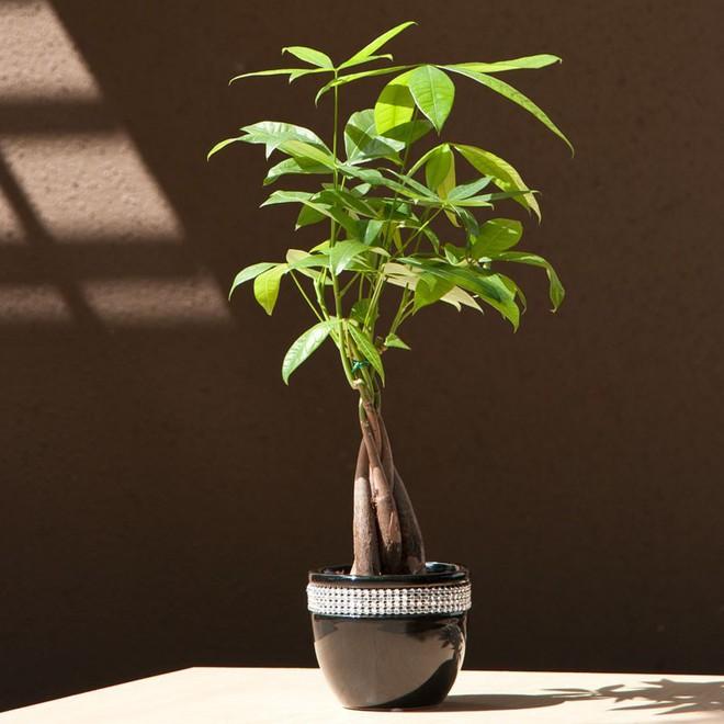 Năm 2019 đến rồi: Đây là 7 loại cây nên trồng để thu hút tài lộc cho gia đình bạn - Ảnh 1.