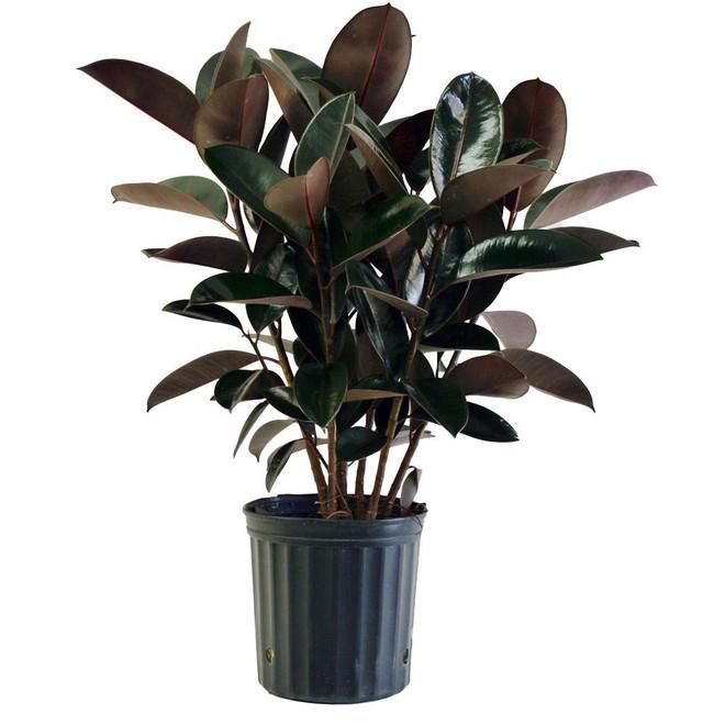 Năm 2019 đến rồi: Đây là 7 loại cây nên trồng để thu hút tài lộc cho gia đình bạn - Ảnh 6.