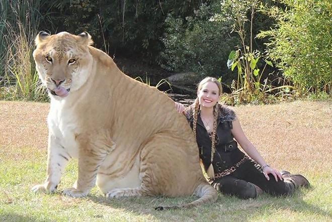 """Những """"hoàng tử lai"""" đẹp đến ngỡ ngàng trong thế giới động vật - Ảnh 1."""