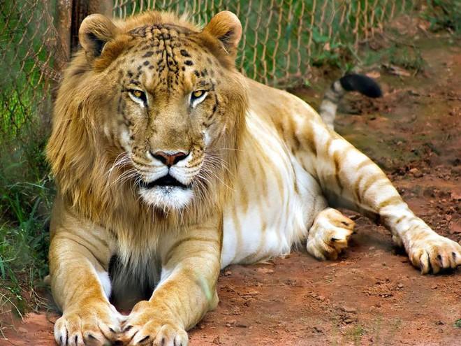 """Những """"hoàng tử lai"""" đẹp đến ngỡ ngàng trong thế giới động vật - Ảnh 2."""
