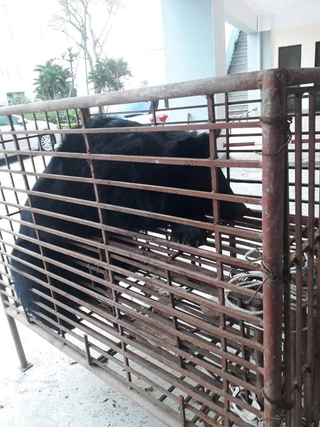 Kiểm tra chiếc xe taxi, công an phát hiện 1 con gấu khủng trốn sau cốp xe - Ảnh 4.