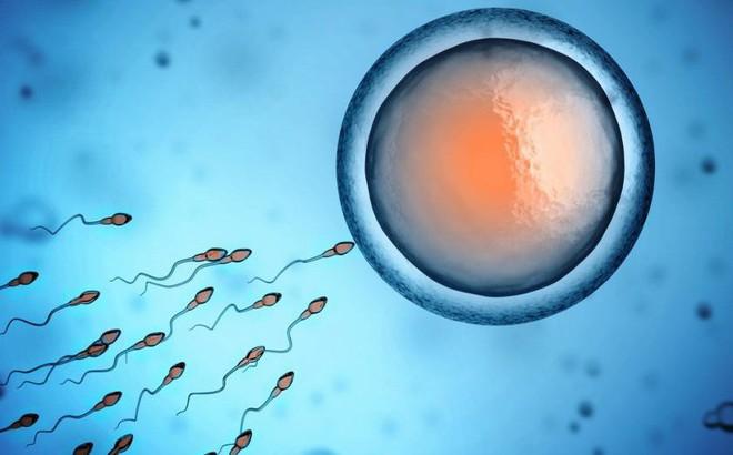 """GS nam khoa: Giai đoạn """"vàng"""" để sinh con trước khi khả năng sinh lý giảm, tinh trùng yếu"""