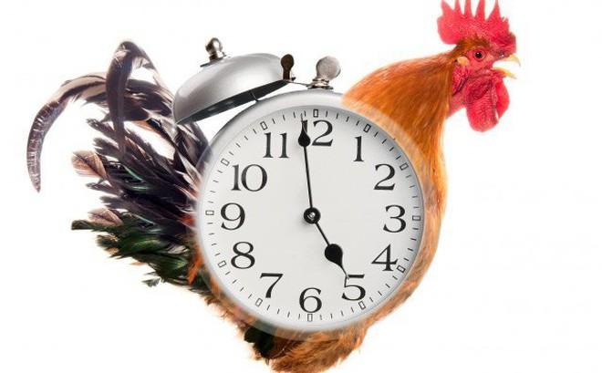 Món quà tuyệt vời chỉ dành cho những người dậy sớm: Biết điều này bạn sẽ không dậy muộn