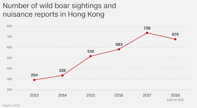 Số vụ nhìn thấy lợn rừng và báo cáo rắc rối liên quan ở Hong Kong. (Ảnh: CNN)