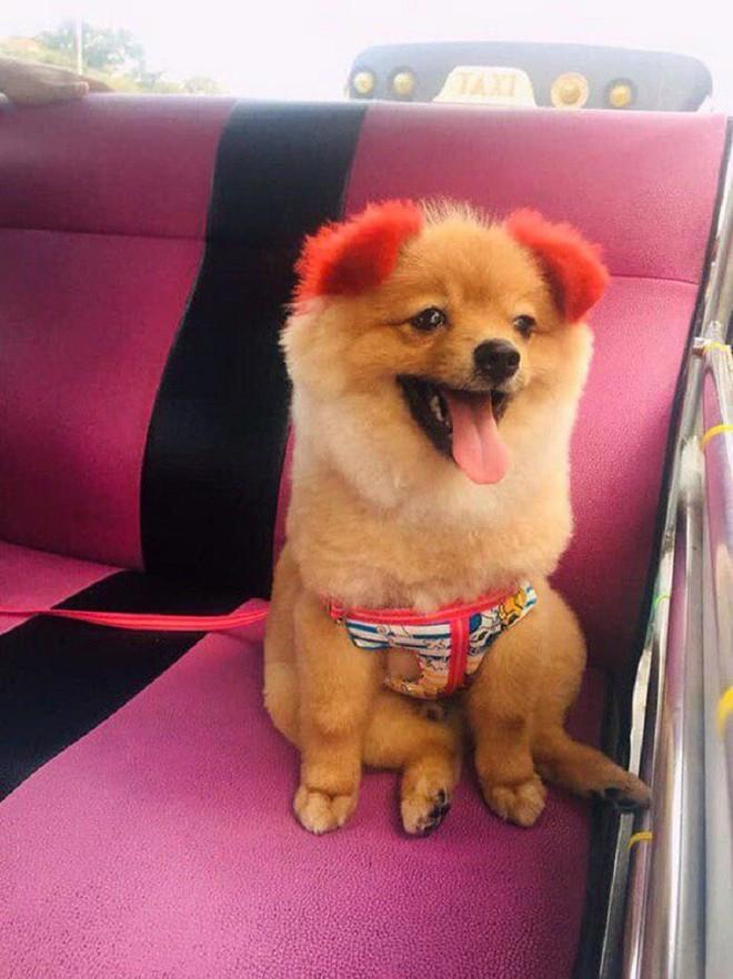 Ăn theo trào lưu nhuộm tai chó màu hồng, cô chủ Thái Lan bị chỉ trích vì khiến thú cưng dị ứng đến rụng cả tai - Ảnh 2.