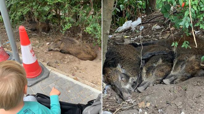 Những con vật xuất hiện trong khu dân cư như chốn không người. (Ảnh: CNN)