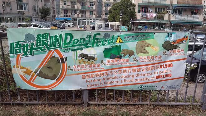 Biển khuyến cáo người dân không cho lợn rừng ăn. (Ảnh: CNN)