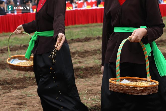 Phó Thủ tướng mặc áo nâu xuống ruộng dắt trâu đi cày ở lễ hội Tịch Điền - Ảnh 10.