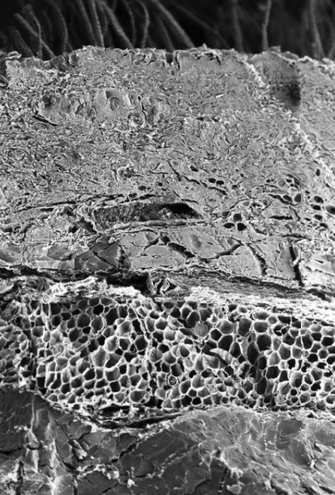 16 phần trên cơ thể trông như thế nào dưới kính hiển vi: Bạn sẽ ngạc nhiên khi nhìn thấy - ảnh 5