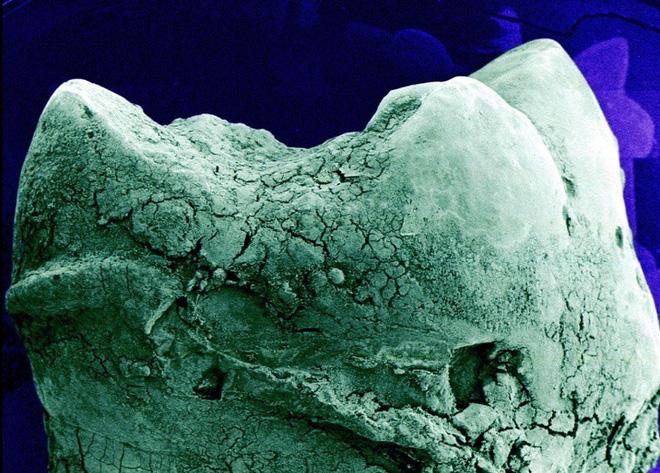 16 phần trên cơ thể trông như thế nào dưới kính hiển vi: Bạn sẽ ngạc nhiên khi nhìn thấy - ảnh 13