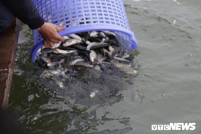 Ảnh: 15.000 người tham gia thả 10 tấn cá xuống sông Hồng trong lễ phóng sinh lớn nhất Hà Nội - Ảnh 7.